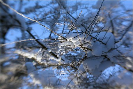 Canopy of Snow